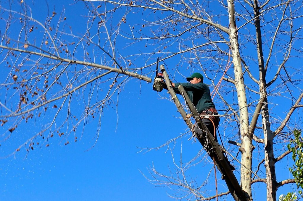Contact Us-Weston FL Tree Trimming and Stump Grinding Services-We Offer Tree Trimming Services, Tree Removal, Tree Pruning, Tree Cutting, Residential and Commercial Tree Trimming Services, Storm Damage, Emergency Tree Removal, Land Clearing, Tree Companies, Tree Care Service, Stump Grinding, and we're the Best Tree Trimming Company Near You Guaranteed!