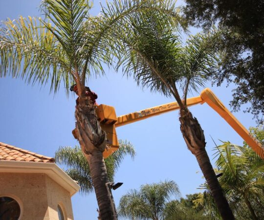 Palm Tree Trimming-Miami Gardens FL Tree Trimming and Stump Grinding Services-We Offer Tree Trimming Services, Tree Removal, Tree Pruning, Tree Cutting, Residential and Commercial Tree Trimming Services, Storm Damage, Emergency Tree Removal, Land Clearing, Tree Companies, Tree Care Service, Stump Grinding, and we're the Best Tree Trimming Company Near You Guaranteed!