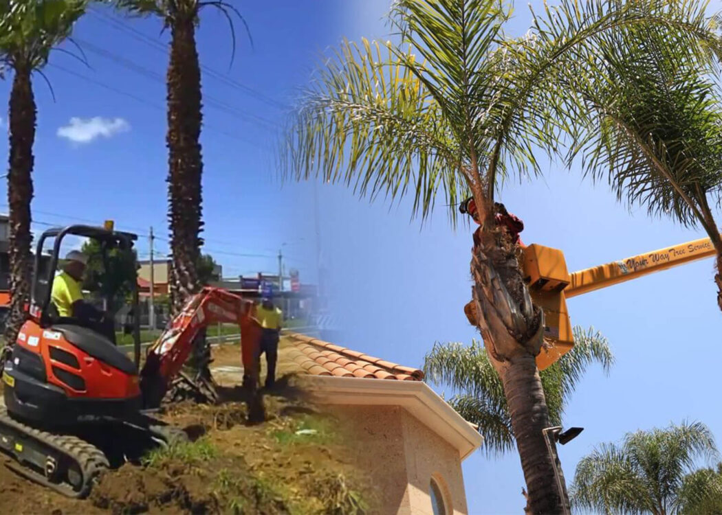 Palm tree trimming & palm tree removal-Miami Gardens FL Tree Trimming and Stump Grinding Services-We Offer Tree Trimming Services, Tree Removal, Tree Pruning, Tree Cutting, Residential and Commercial Tree Trimming Services, Storm Damage, Emergency Tree Removal, Land Clearing, Tree Companies, Tree Care Service, Stump Grinding, and we're the Best Tree Trimming Company Near You Guaranteed!