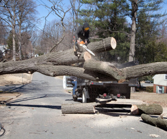 Residential Tree Services-Miami Gardens FL Tree Trimming and Stump Grinding Services-We Offer Tree Trimming Services, Tree Removal, Tree Pruning, Tree Cutting, Residential and Commercial Tree Trimming Services, Storm Damage, Emergency Tree Removal, Land Clearing, Tree Companies, Tree Care Service, Stump Grinding, and we're the Best Tree Trimming Company Near You Guaranteed!