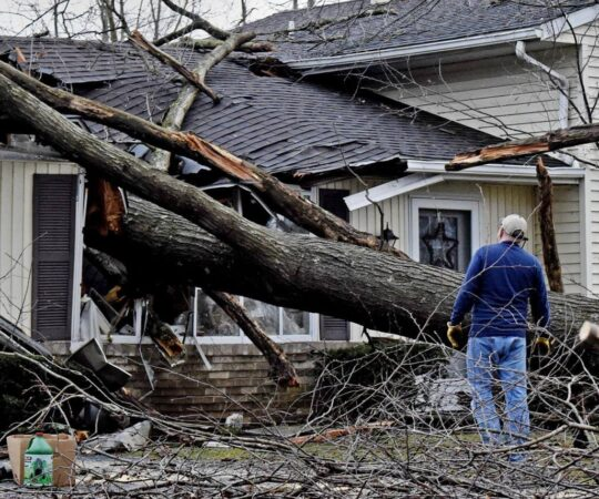 Storm Damage-Miami Gardens FL Tree Trimming and Stump Grinding Services-We Offer Tree Trimming Services, Tree Removal, Tree Pruning, Tree Cutting, Residential and Commercial Tree Trimming Services, Storm Damage, Emergency Tree Removal, Land Clearing, Tree Companies, Tree Care Service, Stump Grinding, and we're the Best Tree Trimming Company Near You Guaranteed!