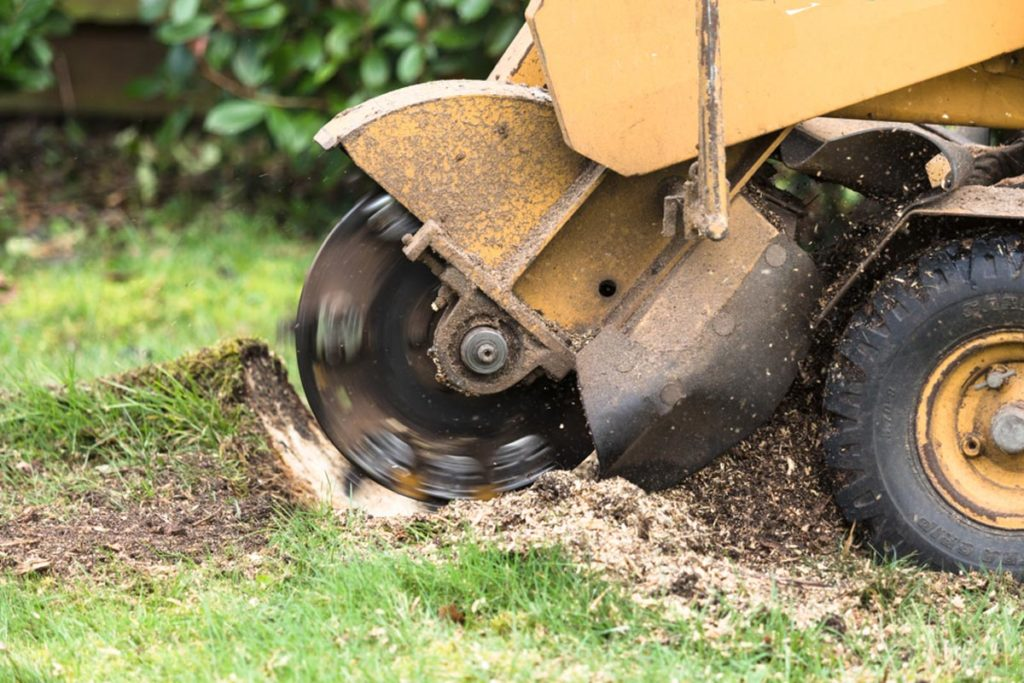 Stump Grinding-Miami Gardens FL Tree Trimming and Stump Grinding Services-We Offer Tree Trimming Services, Tree Removal, Tree Pruning, Tree Cutting, Residential and Commercial Tree Trimming Services, Storm Damage, Emergency Tree Removal, Land Clearing, Tree Companies, Tree Care Service, Stump Grinding, and we're the Best Tree Trimming Company Near You Guaranteed!