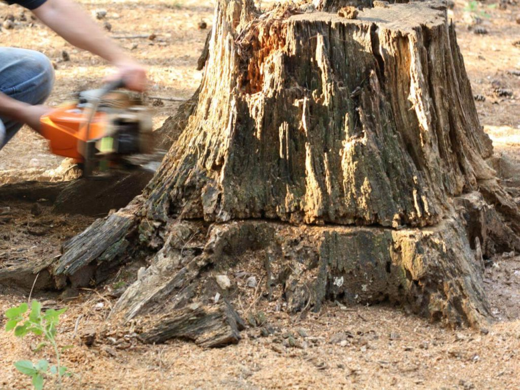 Stump Removal-Miami Gardens FL Tree Trimming and Stump Grinding Services-We Offer Tree Trimming Services, Tree Removal, Tree Pruning, Tree Cutting, Residential and Commercial Tree Trimming Services, Storm Damage, Emergency Tree Removal, Land Clearing, Tree Companies, Tree Care Service, Stump Grinding, and we're the Best Tree Trimming Company Near You Guaranteed!