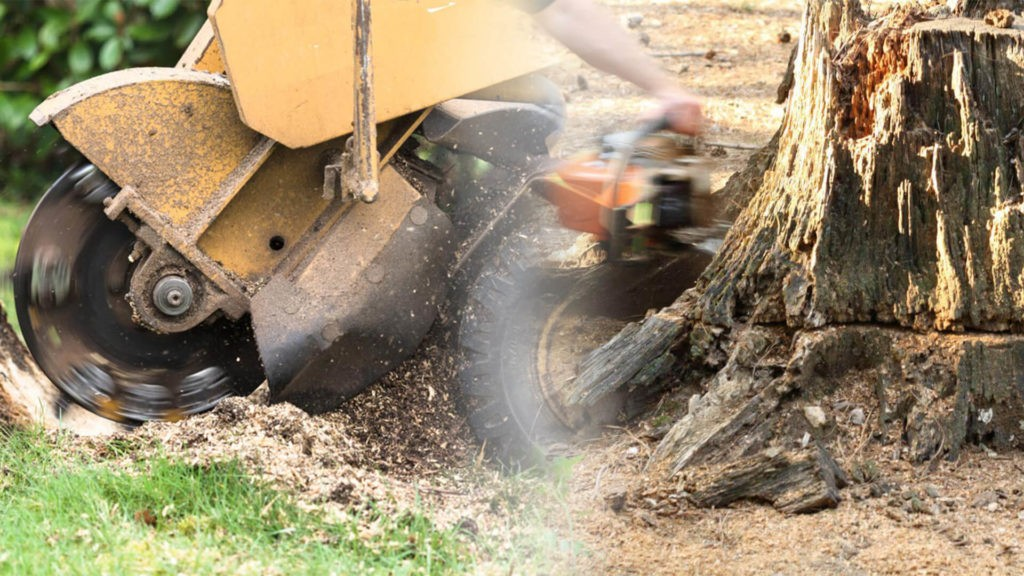 Stump grinding & removal-Miami Gardens FL Tree Trimming and Stump Grinding Services-We Offer Tree Trimming Services, Tree Removal, Tree Pruning, Tree Cutting, Residential and Commercial Tree Trimming Services, Storm Damage, Emergency Tree Removal, Land Clearing, Tree Companies, Tree Care Service, Stump Grinding, and we're the Best Tree Trimming Company Near You Guaranteed!
