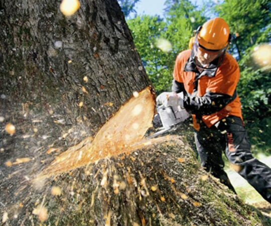 Tree Cutting-Miami Gardens FL Tree Trimming and Stump Grinding Services-We Offer Tree Trimming Services, Tree Removal, Tree Pruning, Tree Cutting, Residential and Commercial Tree Trimming Services, Storm Damage, Emergency Tree Removal, Land Clearing, Tree Companies, Tree Care Service, Stump Grinding, and we're the Best Tree Trimming Company Near You Guaranteed!