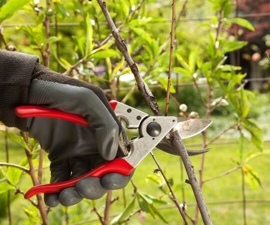 Tree Pruning-Miami Gardens FL Tree Trimming and Stump Grinding Services-We Offer Tree Trimming Services, Tree Removal, Tree Pruning, Tree Cutting, Residential and Commercial Tree Trimming Services, Storm Damage, Emergency Tree Removal, Land Clearing, Tree Companies, Tree Care Service, Stump Grinding, and we're the Best Tree Trimming Company Near You Guaranteed!
