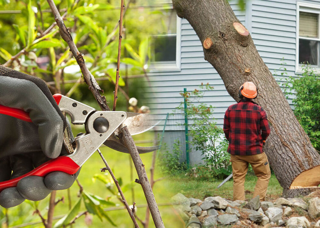 Tree pruning & tree removal-Miami Gardens FL Tree Trimming and Stump Grinding Services-We Offer Tree Trimming Services, Tree Removal, Tree Pruning, Tree Cutting, Residential and Commercial Tree Trimming Services, Storm Damage, Emergency Tree Removal, Land Clearing, Tree Companies, Tree Care Service, Stump Grinding, and we're the Best Tree Trimming Company Near You Guaranteed!